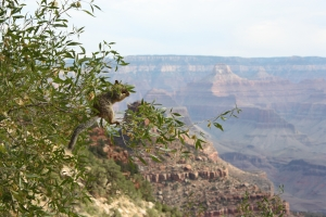 Grand Canyon0213
