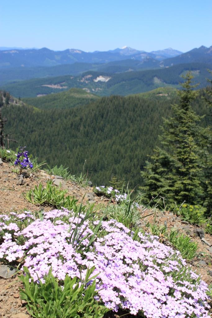 Hiking1560