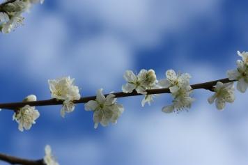 Spring160760