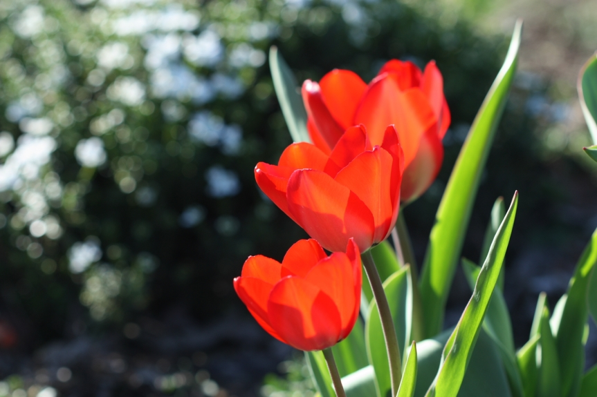 Spring160766