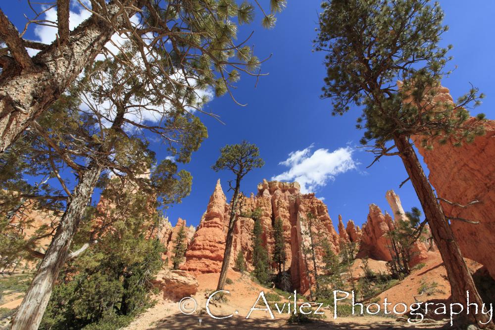 Bryce Canyon-300