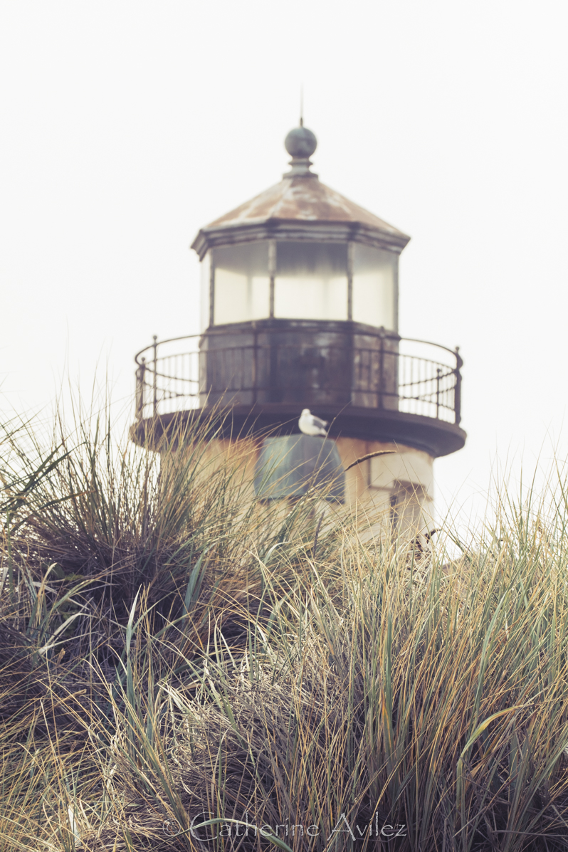 CoquilleRLlighthouse-2603